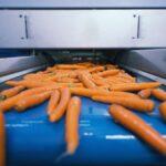verduras frescas cinta transportadora transportadas planta procesamiento alimentos seleccionadas su tamano 342744 515