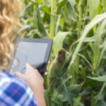 girl farmer with tablet standing in the corn field using internet and sending report 1