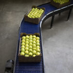 top view of crates full with green organic apples being transported on conveyer belt in food processing factory 1